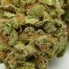 lemon-kush-strain-review-14