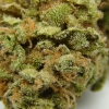 lemon-kush-strain-review-16
