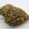 purple-kush-strain-review-01