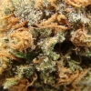 purple-kush-strain-review-07