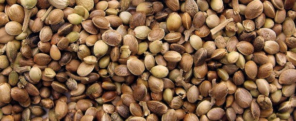 Marijuana Seed Storage Tips