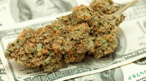 Bank Suspicion and Medical Marijuana