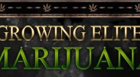 Growing Elite Marijuana &#8211; Book Review