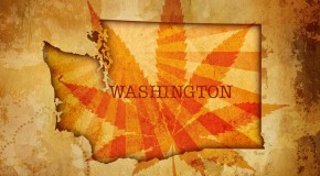 Washingtons Cannabis Dispensaries &#8211; Muddy Waters