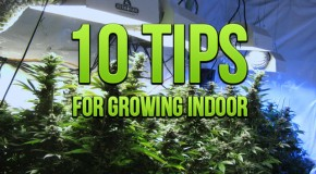 10 Tips For Growing Indoor