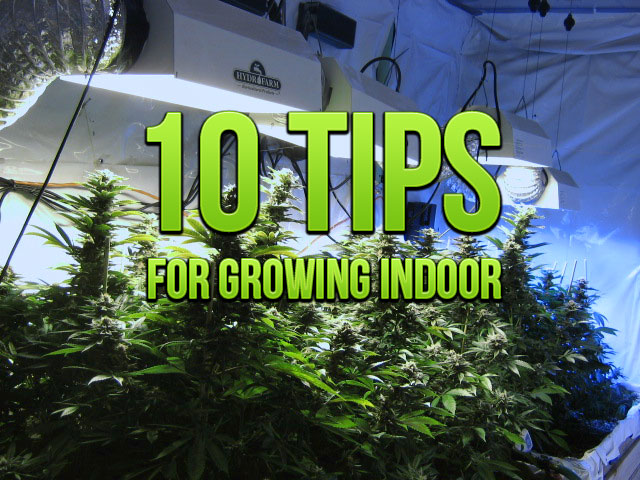 Weed Plants Growing Indoors 10 tips for growing indoor