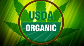 Organic Marijuana Fertilizers