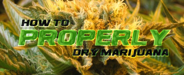 How to Properly Dry Marijuana