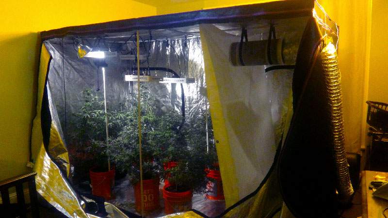 apollo-grow-tent & Marijuana Growers HQ Apollo Horticultureu0027s Mylar Hydroponic Grow ...